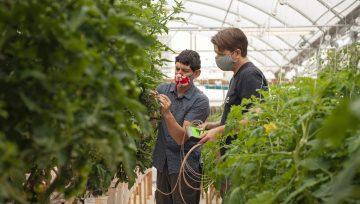 Smanjite potrošnju vode za navodnjavanje - Senzori na biljkama smanjuju navodnjavanje za četvrtinu